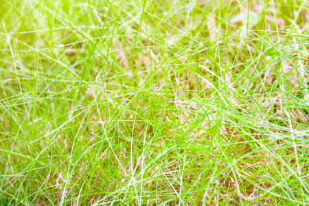 slender young grass, scenic natural green background
