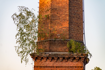 The tree grows on an old brick chimney, Tree grows out of the wall Imagens