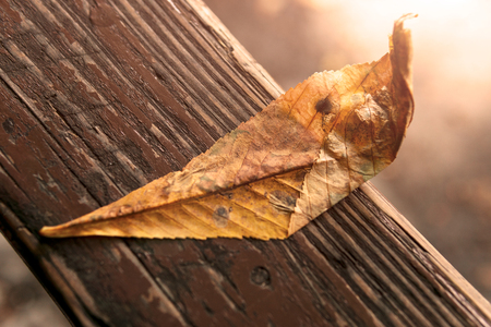 Yellow leaf from a tree lies on a bench, close-up, autumn, old leaves