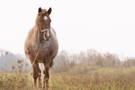 untidy horse standing in the middle of a field