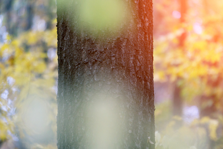 tree trunk in the autumn forest, background 免版税图像