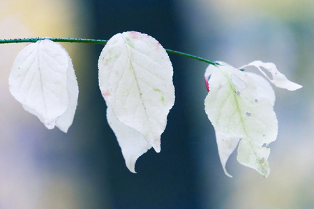 background white leaves in the forest, macro,