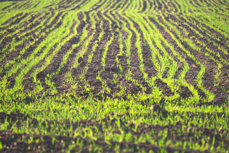 green field in autumn, background image of a tree in a field, rural industry 免版税图像