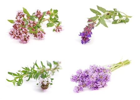 valerian: Medicinal and culinary herb flower collection, isolated on white background