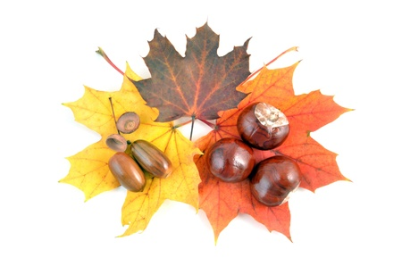 acorn nuts: Chestnut nut, acorn and autumn leaves isolated on white   Stock Photo