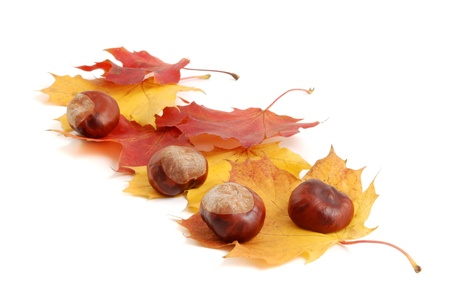 Chestnut nut and autumn leaves isolated on white   photo