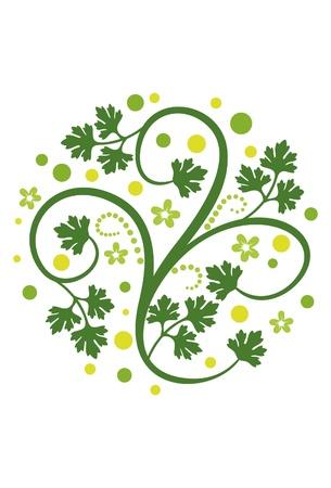 cilantro: Decoración floral con hojas de cilantro Vectores