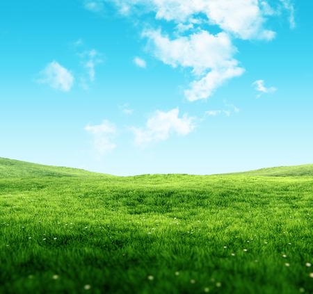 Hemel en gras achtergrond Groene velden onder de blauwe hemel