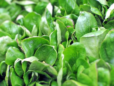 cornsalad: Fresh green cornsalad leaves on market, green background Stock Photo