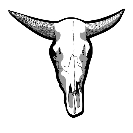 cow skull: Hand-drawn cow skull isolated on white, vector illustration