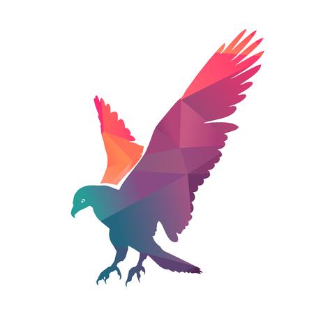 bald: Illustration of colorful bald eagle, vector illustration