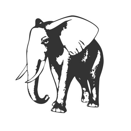 elephant head: Walking elephant, black and white vector illustration