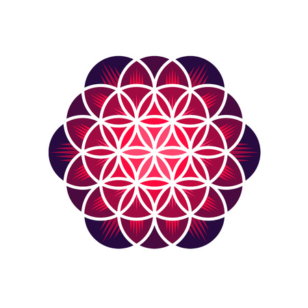 flower of life: Purple flower of life isolated on white background, vector illustration