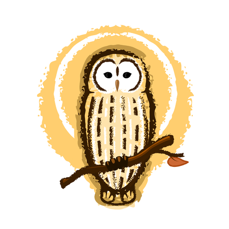 barred: Barred owl illustration, owl sitting on a branch Illustration