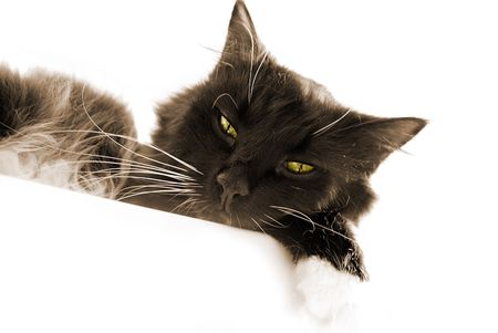 bw: bw cat resting