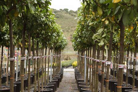 plant nursery: The seedlings in flowerpots