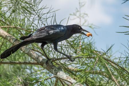 morsel: Bird stealing food at park