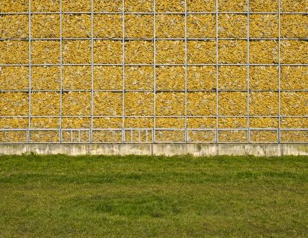 corn, wall, yellow, natural, memory Stock Photo - 18141625
