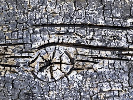 quemado: Ramificaci�n de madera quemada negro