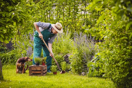 Man working in the garden with dog Stockfoto