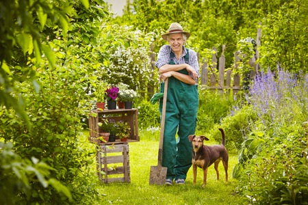 Garden with man and dog Stockfoto