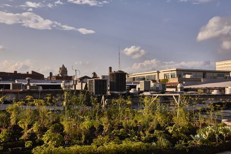 shrinking: Urban Farming and Gardening in Detroit USA on a house roof