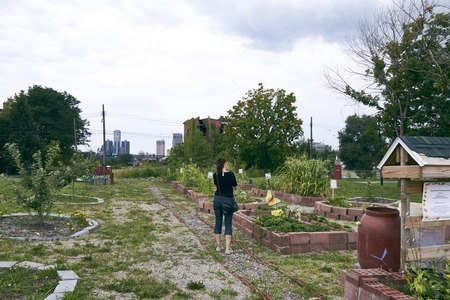 urban gardening: Urban Farming and Gardening Beet in Detroit USA with Skyline