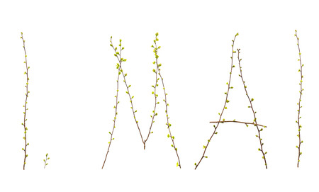 platelets: typography and type 1. May branches with platelets