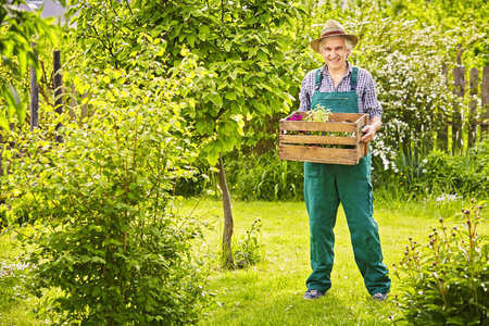 herbs boxes: Gardener in the garden with straw hat carrying box of plants Stock Photo