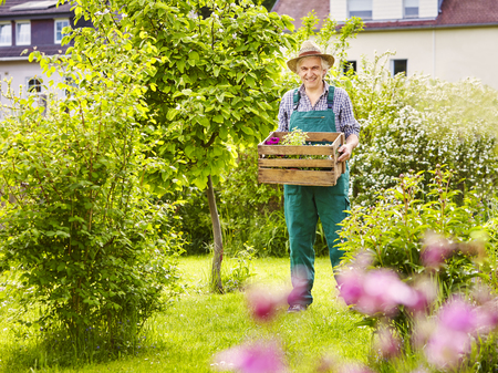 chapeau paille: Gardener in the garden with straw hat carrying wooden box