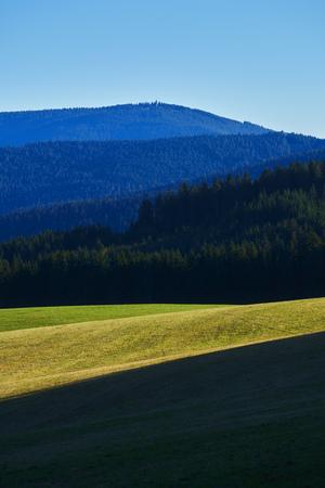 Wiese am Wald mit Berghang in der Sonne im Herbst