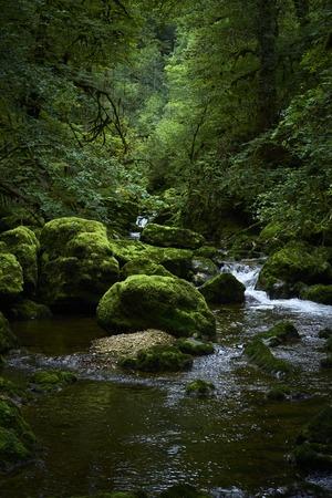 Fluss in einem Wald im Sommer mit Baum Laub grün und Steinen mit Moos bedeckt