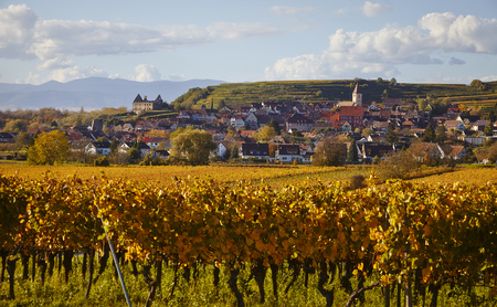 Burkheim als Dorf mit Kirche und Häusern und Ruine und Weinberg in der Abendsonne