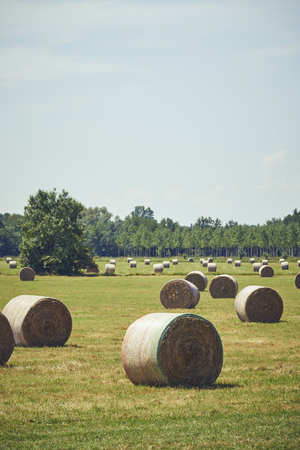 Straw bales in a meadow in front of trees and forest green Banco de Imagens