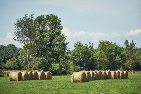 Straw bales green in a meadow next to each other in front of trees