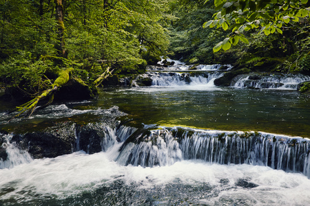 River in a forest in summer with tree foliage green and waterfall Banco de Imagens