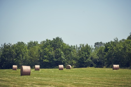 Straw bales in a meadow or trees green