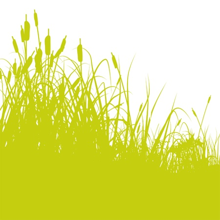 marsh plant: Canna Vettoriali