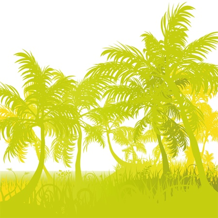Palm trees on the stand Vector