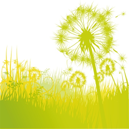 Dandelions and dandelion Stock Vector - 15017579