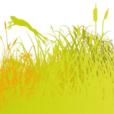 rietkraag: riet en kikker in de vijver