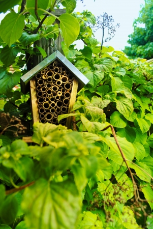wintering: Insect House Stock Photo