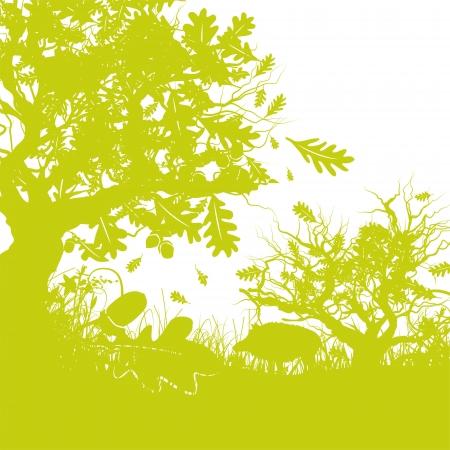 wild boar in a oak forest