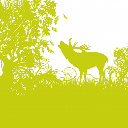 Deer in the oak forest Vector