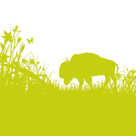 buffalo in the grass Vector