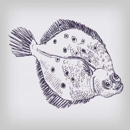 Drawing plaice Stock Vector - 16665269