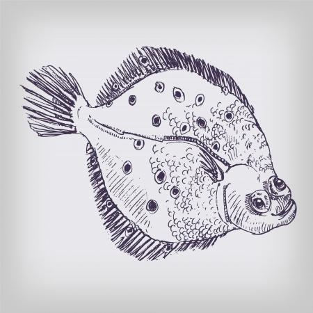plaice: Drawing plaice