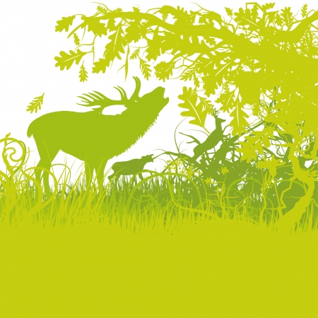 rutting: rutting season and deer Illustration