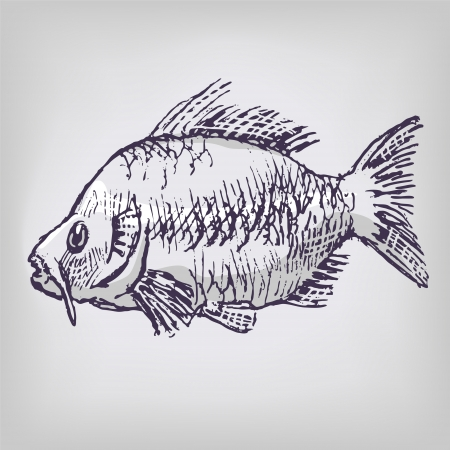 carp fishing: Carp and fishing Illustration