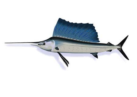 high sea: Marlin
